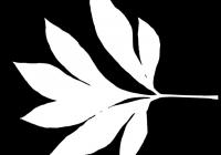 Pion Leaf Opacity Mask Texture 04
