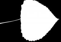 Poplar Tree Leaf Texture Mask 02
