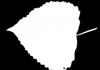 Poplar Tree Leaf Texture Mask 04