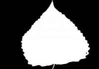 Poplar Tree Leaf Texture Mask 06