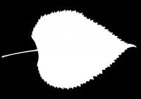 Teil Tree Leaf Opacity Mask Texture