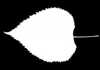 Linden Tree Leaf Opacity Mask Texture