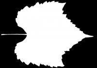 Grape Vine Leaf Opacity Texture Map