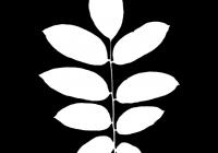 Walnut Tree Leaf Texture Mask