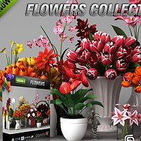 CGAxis models volume 6 flowers collection Commercial 3D Models
