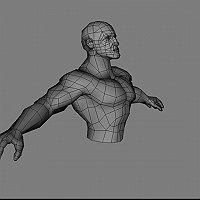 A great heroic male torso 3d model Commercial 3D Models