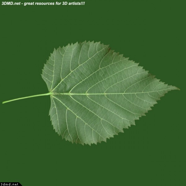 Top 28 Leaves Tree Fig Tree Leaf Branch Fig Tree